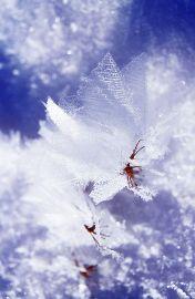 Cristalli di neve - Autore: Mathias Kabel - Fonte: http://commons.wikimedia.org/wiki/Image:Schneekristalle.jpg