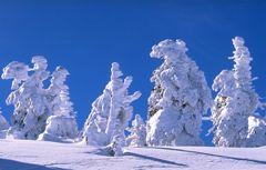 Alberi coperti di neve - Fonte: http://fam-tille.de/harz/brocken/2001_057.html