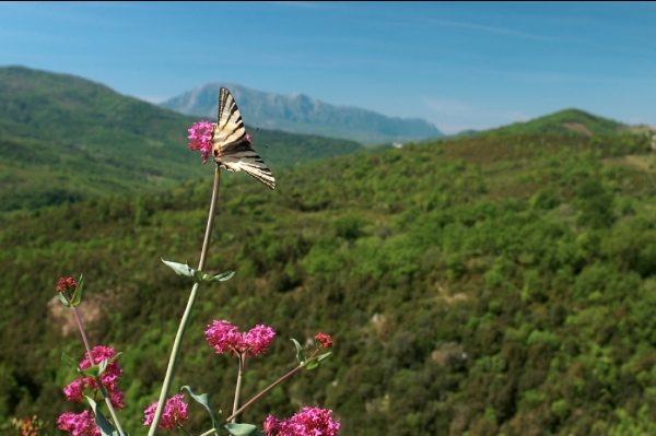 GeoFestival di Morigerati - fonte immagine: www.morigeratigeofestival.it
