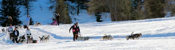 Sleddog a Passo del Tonale - fonte: www.huskyland.net