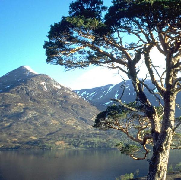 progetto Glen Affric Forest, visual