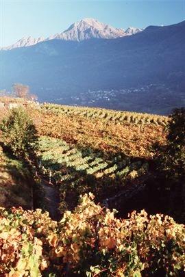 Viticoltura di montagna. fonte: www.cervim.org