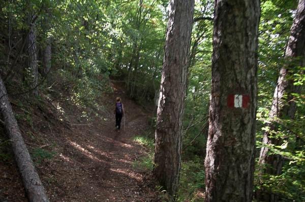 Il sentiero tracciato dal CAI. Foto: Chiara Tebaldi