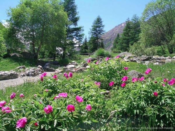 Giardino Botanico Alpino Paradisia. Fonte: pagina Facebook del Giardino