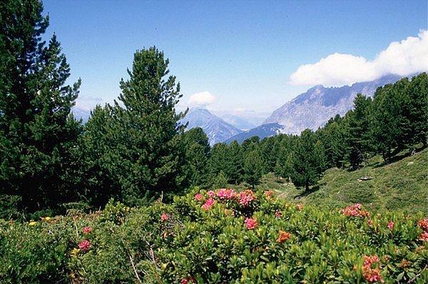 Foto: Consorzio del Parco Nazionale dello Stelvio