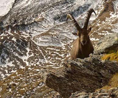 600px-parco-nazionale-gran-paradiso-foto-mirko-sotgiu-alpinfotoit