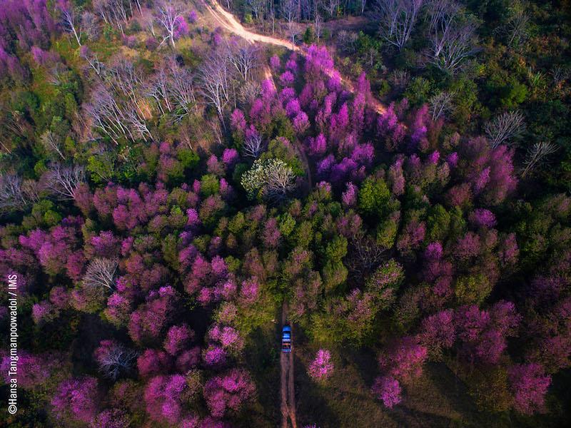 Aerial. Foto: Hansa Tangmanpoowadol. Fonte: IMS