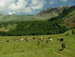 Alpeggio in Val di Lanzo. Fonte: vinoecibo.it