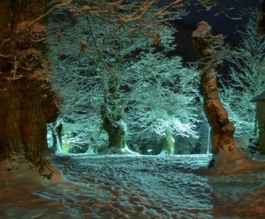 614px511-il-parco-dei-castagni-montecreto-alberi-monumentali-di-oltre-400-anni