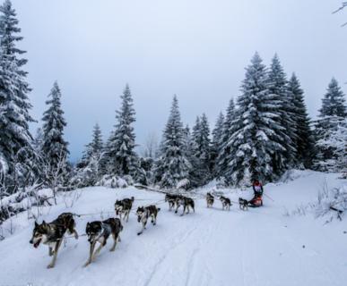 La Grande Odyssee Savoie Mont Blanc. Foto: Vincent Piccerelle