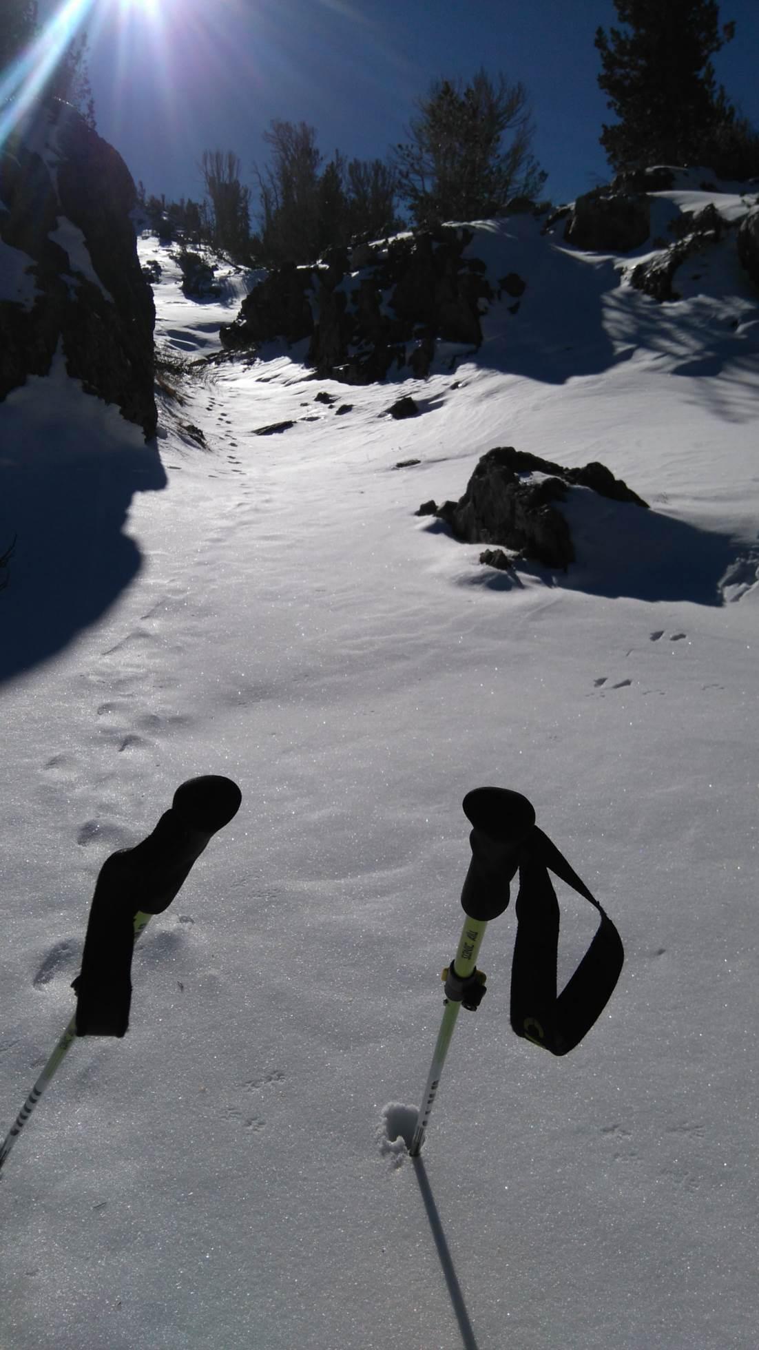 Neve troppa neve per il mio cammino, ma non sono solo